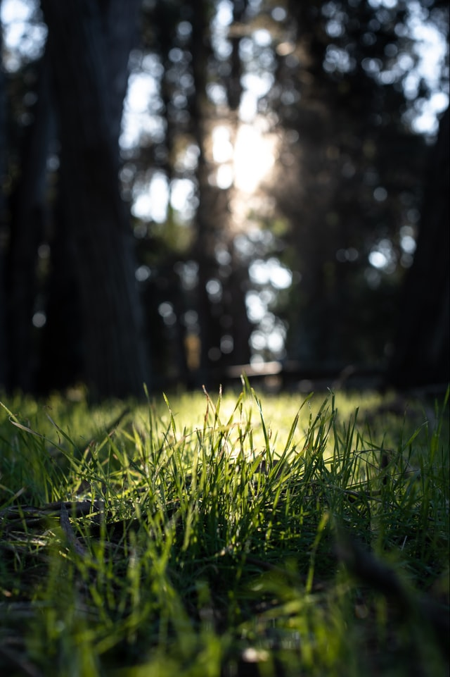 Sunlight shining down on a patch of grass beneath dark trees.