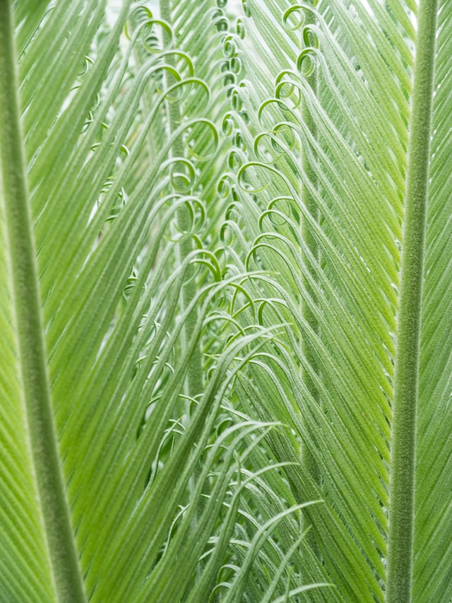 Large, wide green leaves standing vertically