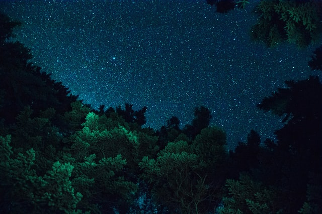 Starry sky over a green forest